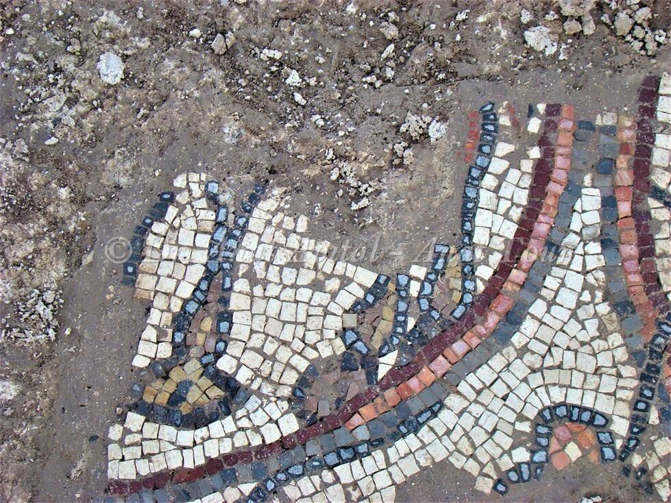 """רגלי גמל, פסיפס כנסיית אלומה (ד""""ר ענת אביטל)"""