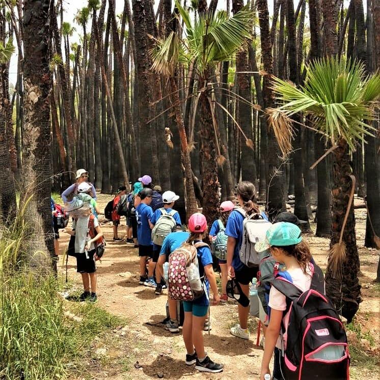"""טיול ויום כיף לתלמידי ביה""""ס נווה זוהר- תמר-  מטע דקלי ושינגטוניה"""