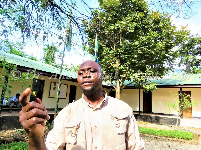 """עץ מברשת השיניים Salvadora persica סלוודורה פרסית, טנזניה, צילום: ד""""ר ענת אביטל"""
