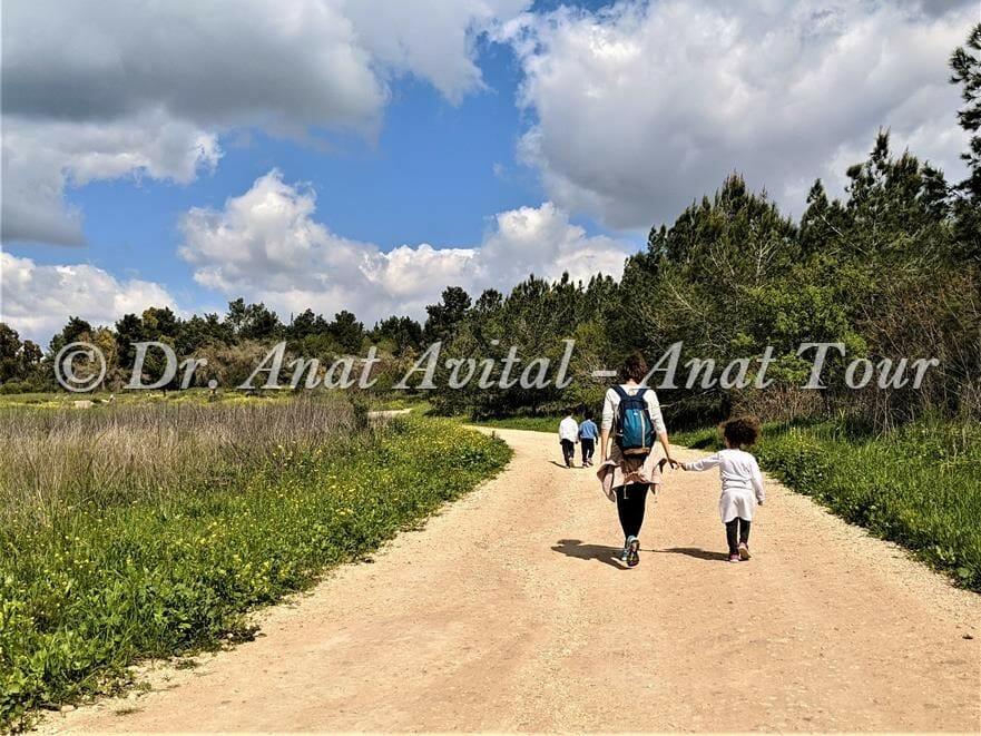 טיול אביבי ביערות בן שמן ושדות חיטה מוריקה, צילום: ד:ר ענת אביטל