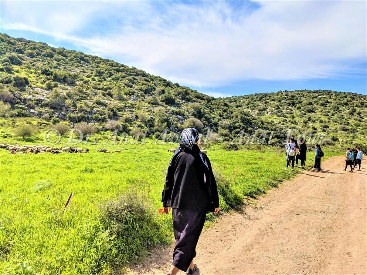 """תל שוכה- גבעת התורמוסים בעמק האלה, צילום: ד""""ר ענת אביטל"""