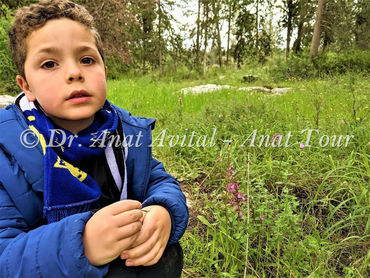 """סחלב פרפרני וזוטה לבנה, צילום: ד""""ר ענת אביטל"""