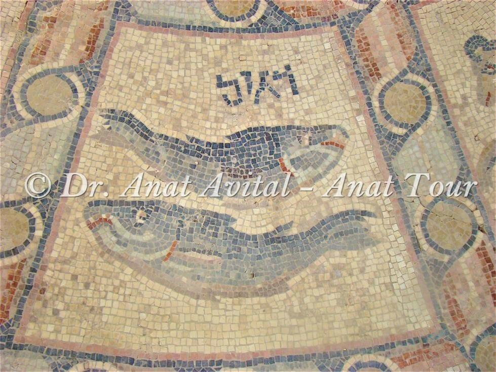"""מזל דגים, פסיפס בית כנסת חמת טבריה, צילום: ד""""ר ענת אביטל"""