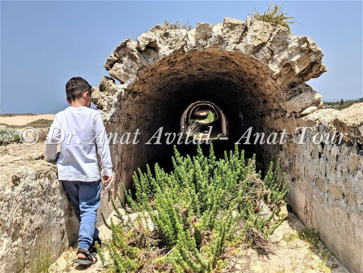 """לענה חד-זרעית באמה הרומית הנמוכה בחוף אקוודוקט קיסריה, צילום: ד""""ר ענת אביטל"""
