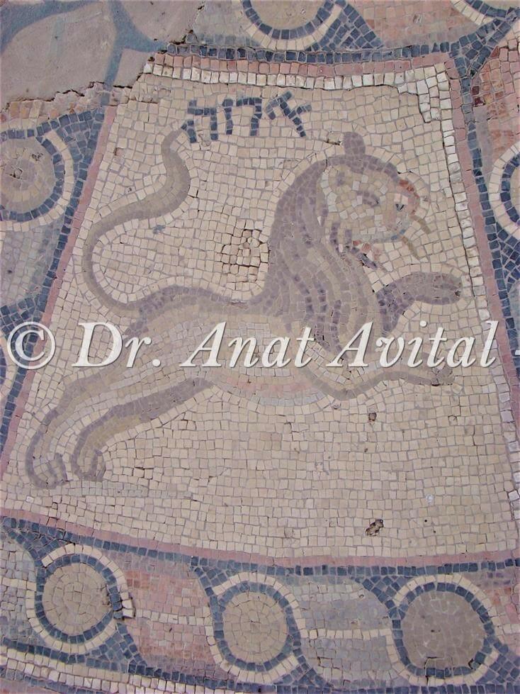 """מזל אריה, פסיפס בית כנסת חמת טבריה, צילום: ד""""ר ענת אביטל"""
