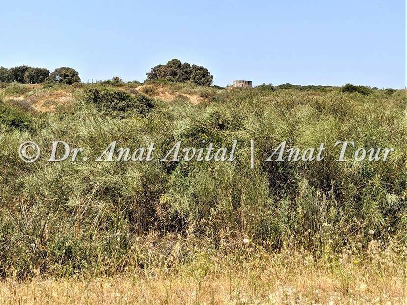 """רותם המדבר, חולות גן לאומי פארק השרון, צילום: ד""""ר ענת אביטל"""
