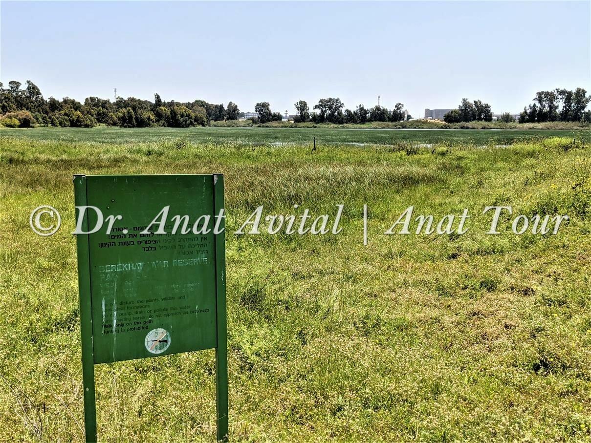 """ברכת יער, שביל ישראל בפארק השרון, צילום: ד""""ר ענת אביטל"""
