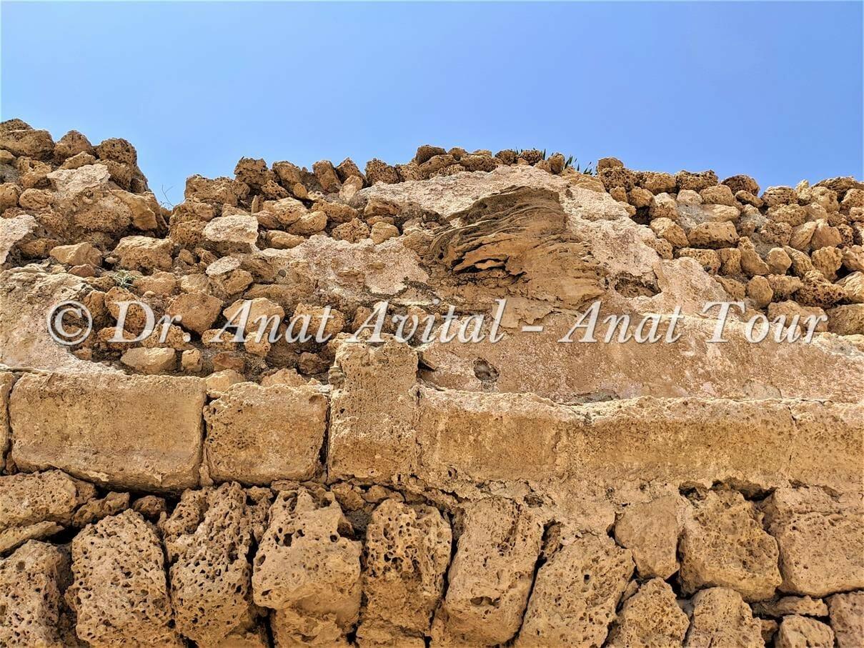 """טרוורטין בדופן האמה הרומית הגבוהה בקיסריה, צילום: ד""""ר ענת אביטל"""