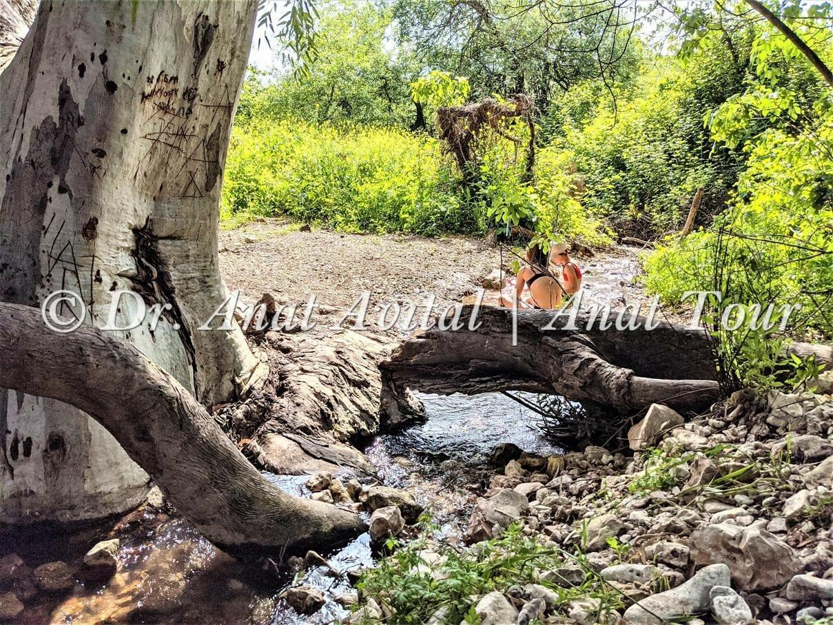 """חניון האקליפטוס על נחל שלף ברמות מנשה, צילום: ד""""ר ענת אביטל"""