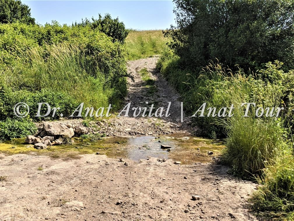 """נחל שלף - צמחיית נחלים ומים מתוקים, צילום: ד""""ר ענת אביטל"""