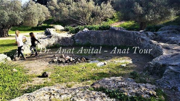 """גת חצובה בסלע הגיר, תל חדיד, צילום: ד""""ר ענת אביטל"""