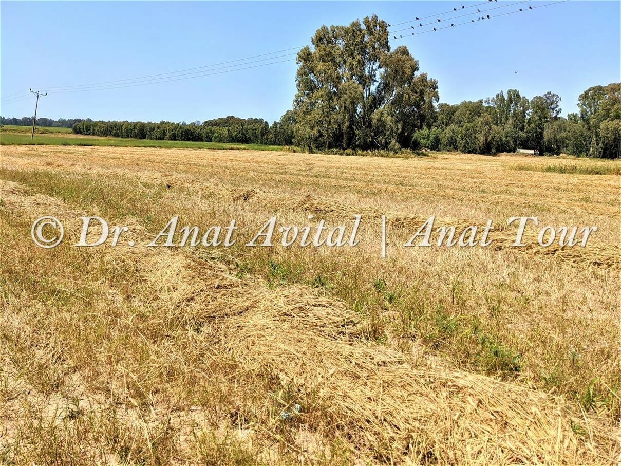 """שדות שלף, צילום: ד""""ר ענת אביטל"""