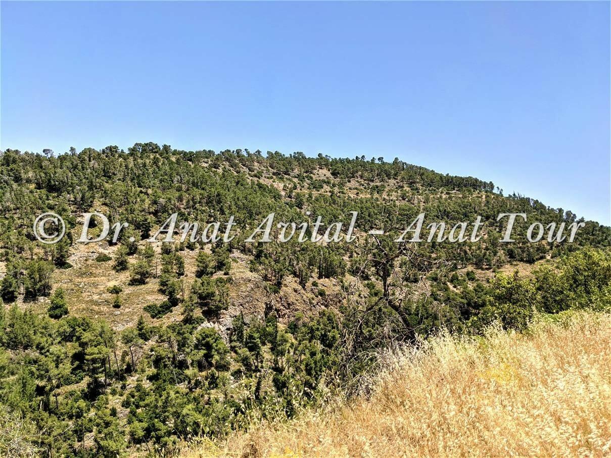 """נחל כיסלון יער קדושים, הרי ירושלים, צילום: ד""""ר ענת אביטל"""