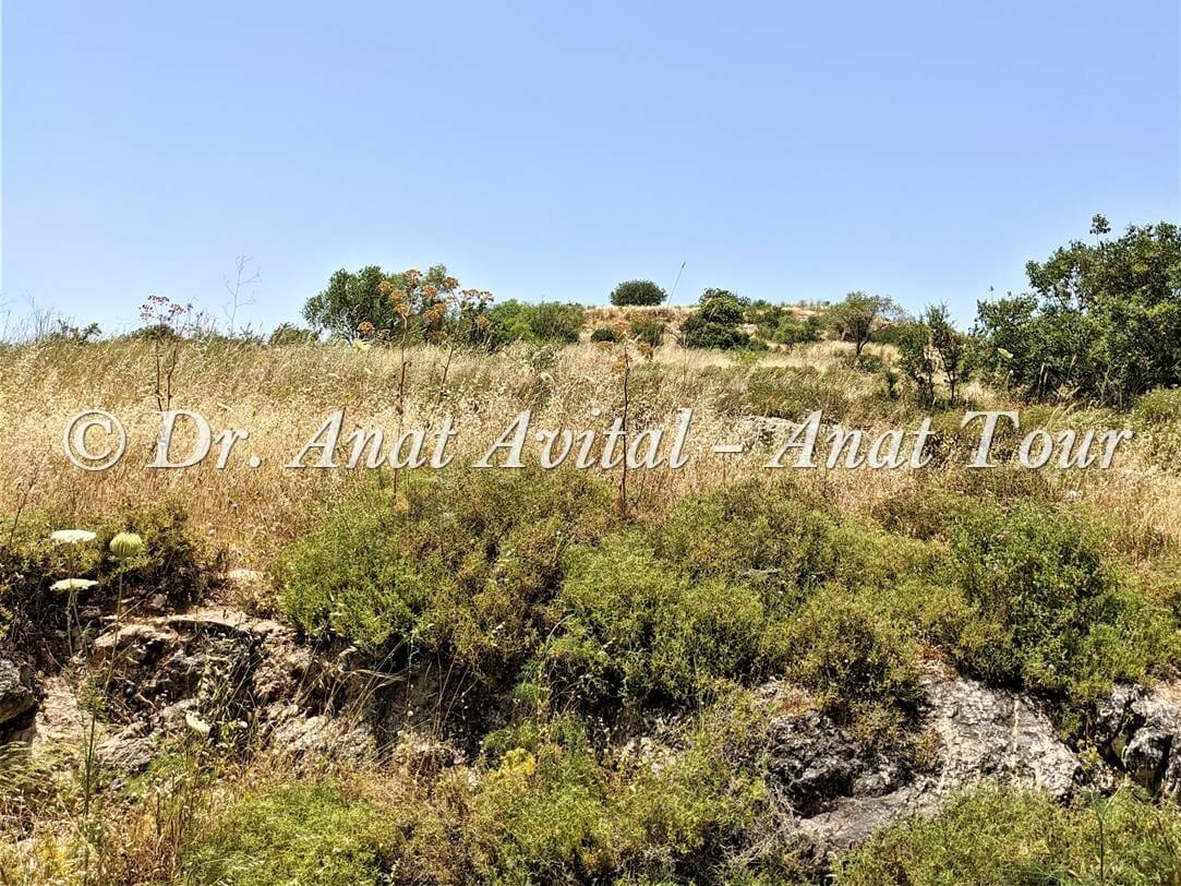 """תל כיסלון-כסלא, נחל כיסלון יער קדושים, הרי ירושלים, צילום: ד""""ר ענת אביטל"""