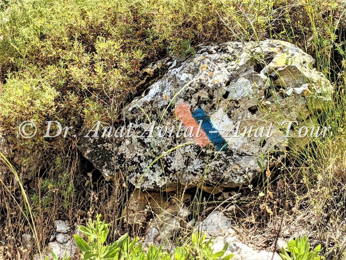 """שביל ישראל, צילום: ד""""ר ענת אביטל"""
