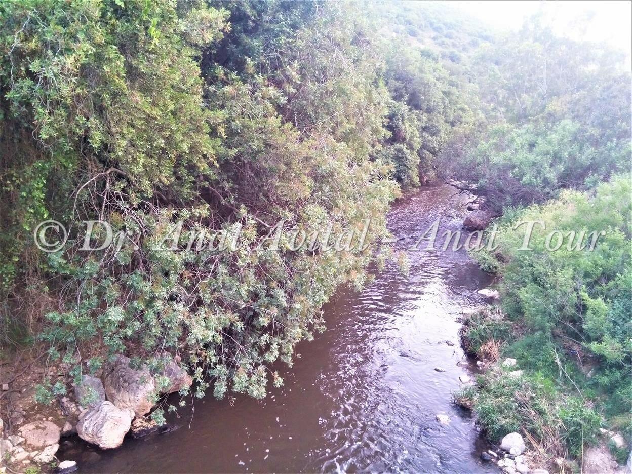 """מי ביוב מטהורים זורמים בנחל שורק, סימון אדום, צילום: ד""""ר ענת אביטל"""