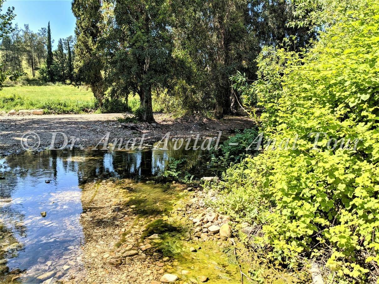 """עין מחוללים בנחל שלף ברמות מנשה, פריחה ומים בחורף ובאביב, צילום: ד""""ר ענת אביטל"""