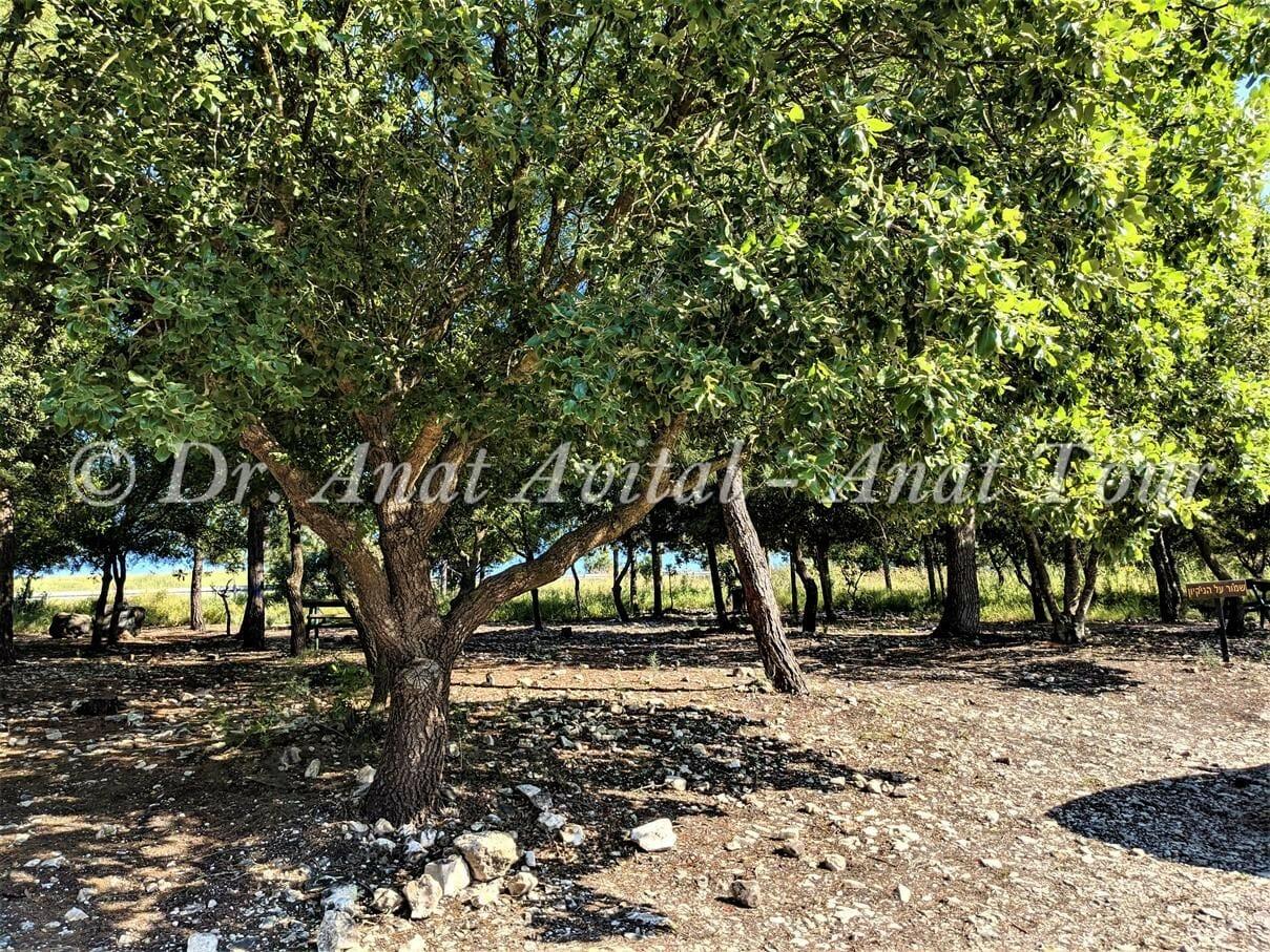 """חניון מאגר פירחה-רז-גלעד, רמות מנשה, צילום: ד""""ר ענת אביטל"""