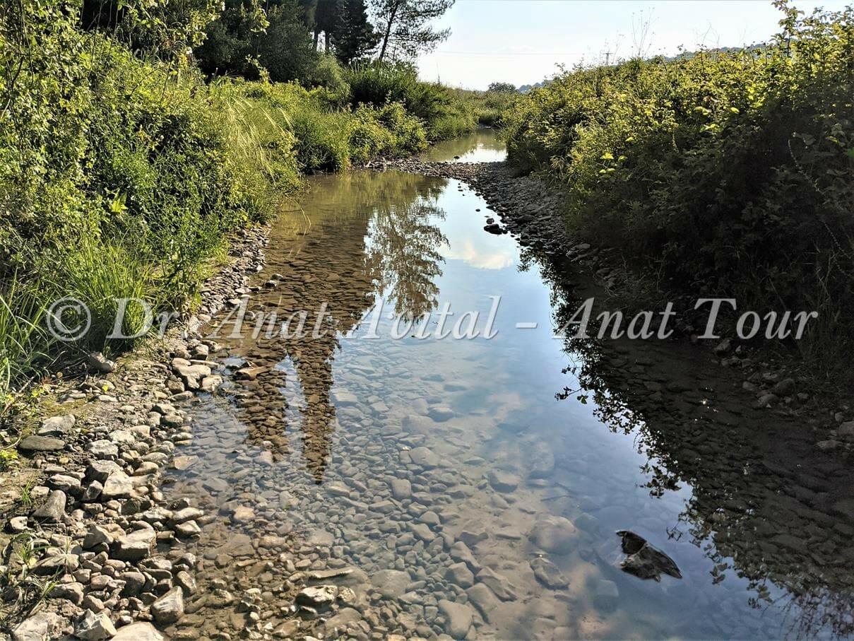 """נחל רז ברמות מנשה עם מים באביב, צילום: ד""""ר ענת אביטל"""