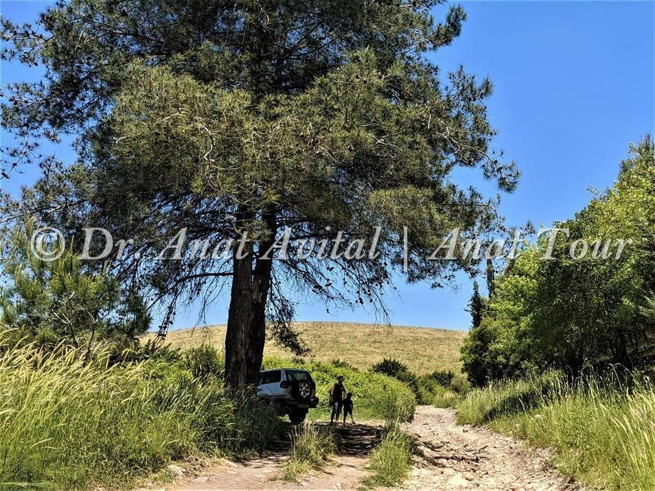 """מטיילים בנחל שלף, רמות מנשה, צילום: ד""""ר ענת אביטל"""