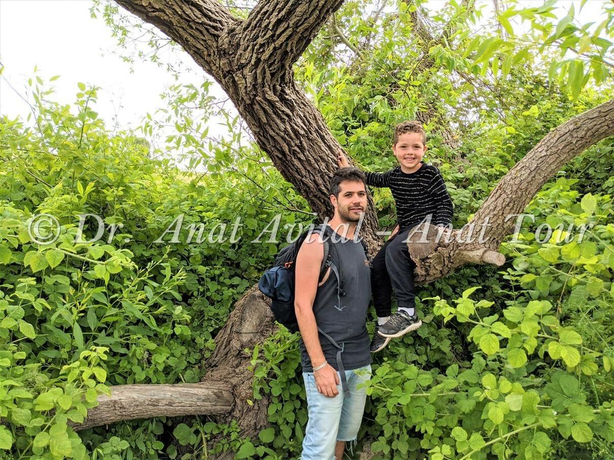 """עץ ערבה בעין ריחניה, ברמות מנשה, מגלשות מים זורמים וקרירים, צילום: ד""""ר ענת אביטל"""