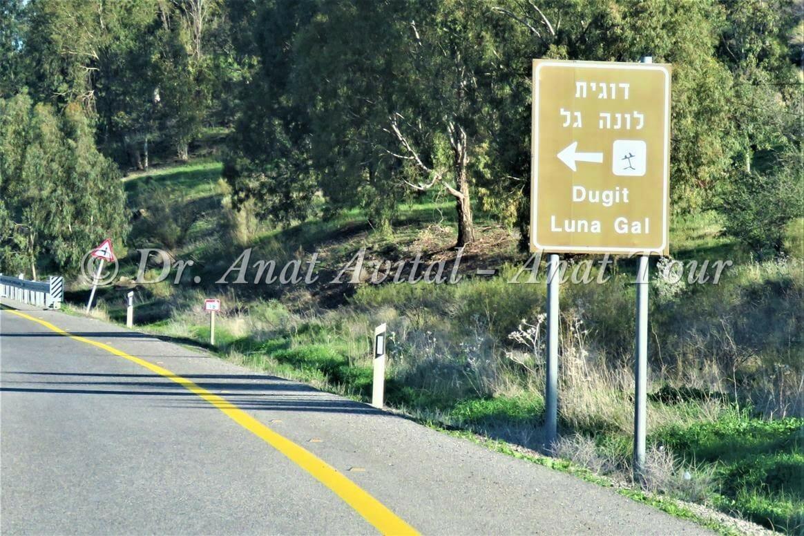 """לונה גל, שביל סובב כינרת, צילום: ד""""ר ענת אביטל"""