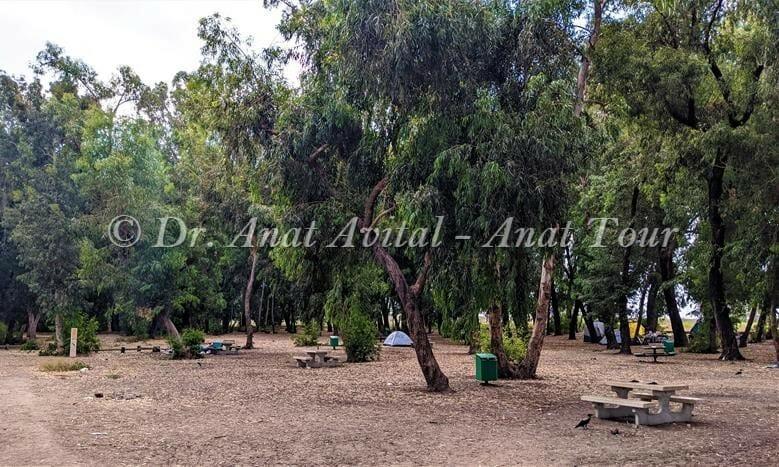 """חניון גן לאומי שפך נחל שורק (חניון הצנחנים) בכניסה לטיול בנבי רובין, שפך נחל שורק-פלמחים, דיונות ואקליפטוסים ענקיים, צילום: ד""""ר ענת אביטל"""