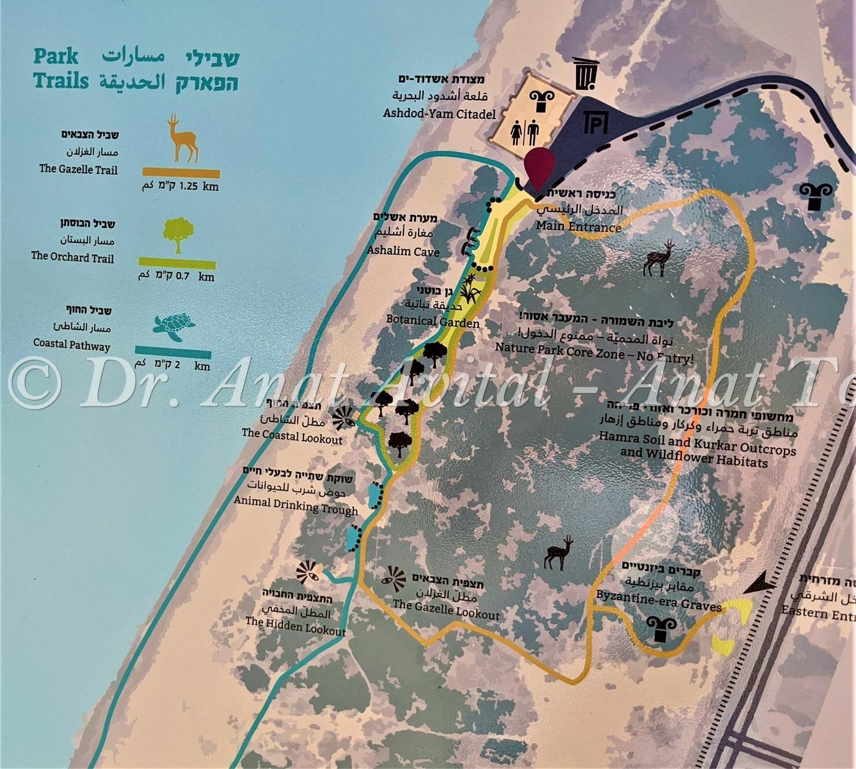 """פארק אקולוגי מצודת אשדוד ים, צילום: ד""""ר ענת אביטל"""