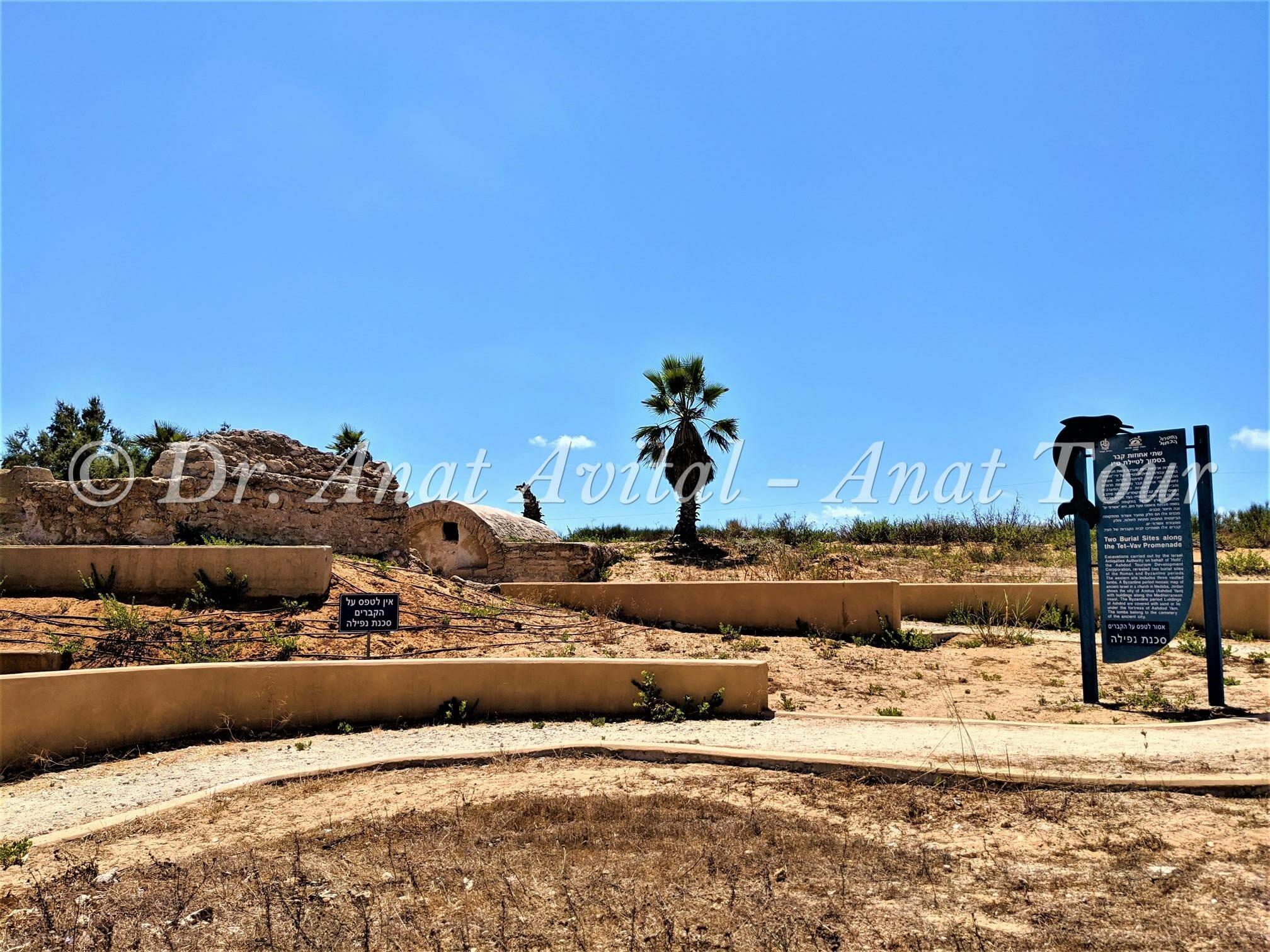 """אחוזות קבר ליד מצודת אשדוד ים, צילום: ד""""ר ענת אביטל"""