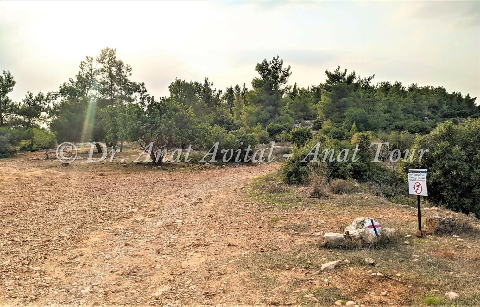 """שמורת טבע סנסן, צילום: ד""""ר ענת אביטל"""