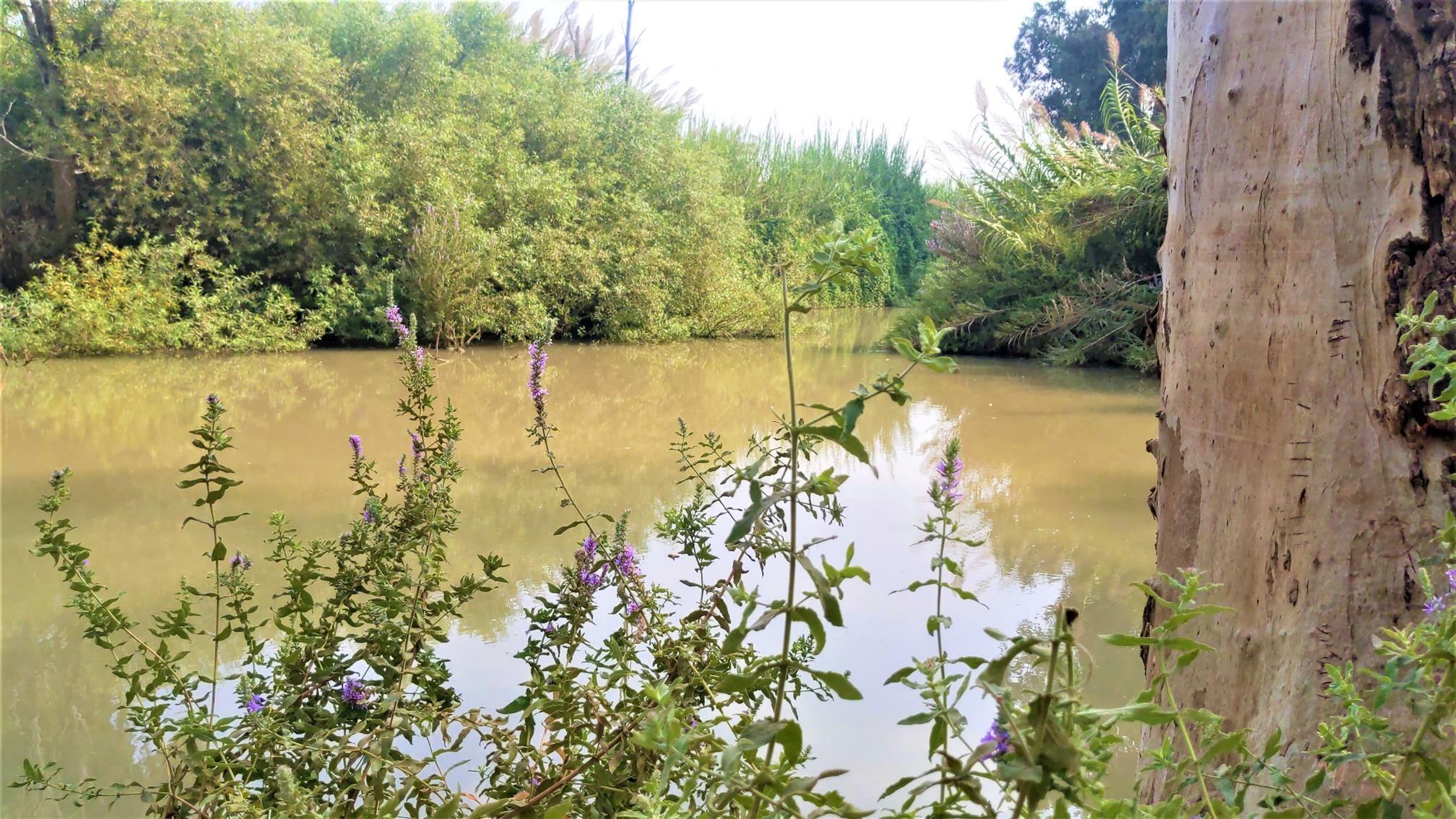 """ברכת סכר טחנת אבו רבאח על הירקון, צילום: ד""""ר ענת אביטל"""