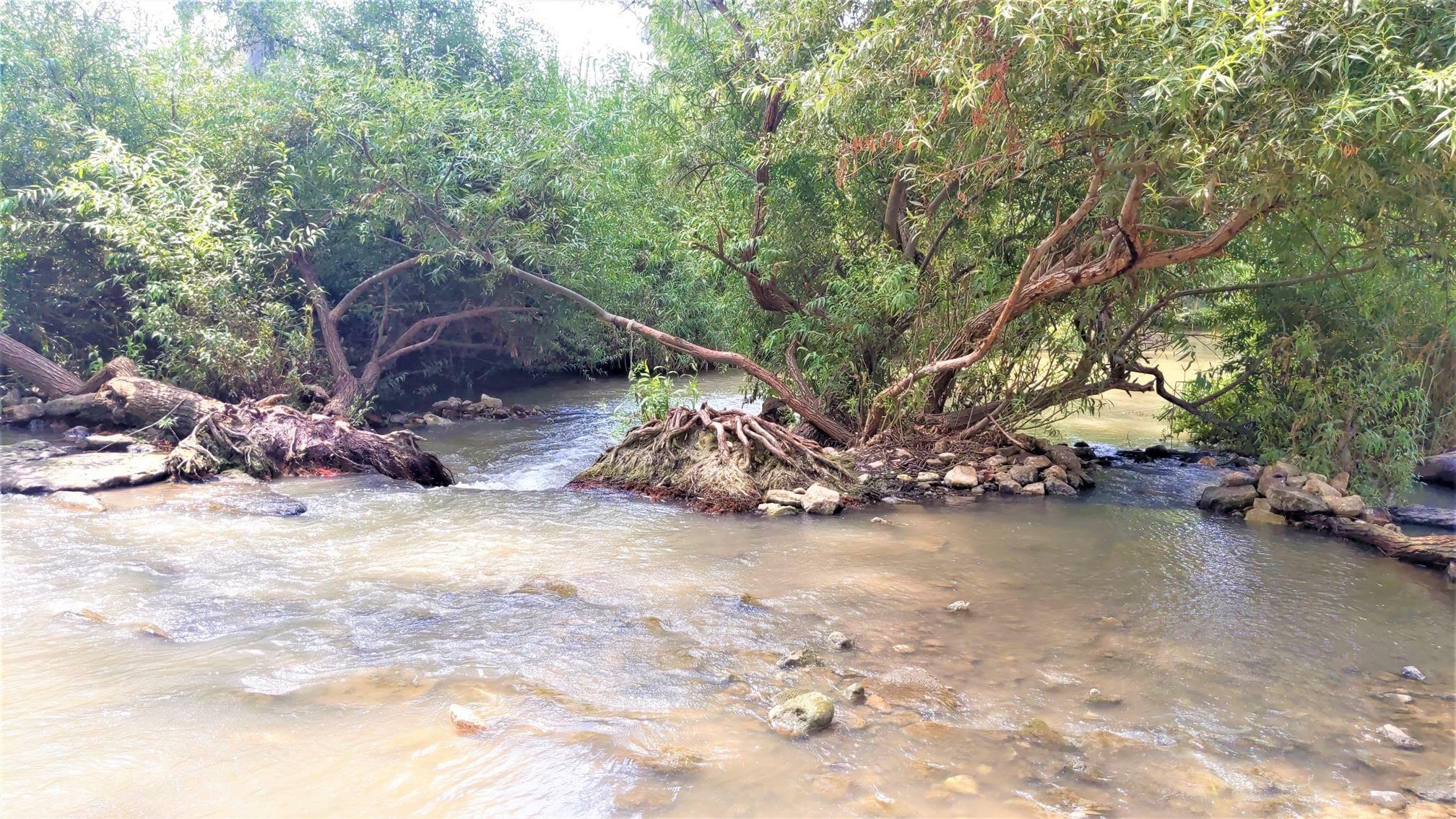 """הירקון הנקי ופלגי מים זכים, צילום: ד""""ר ענת אביטל"""
