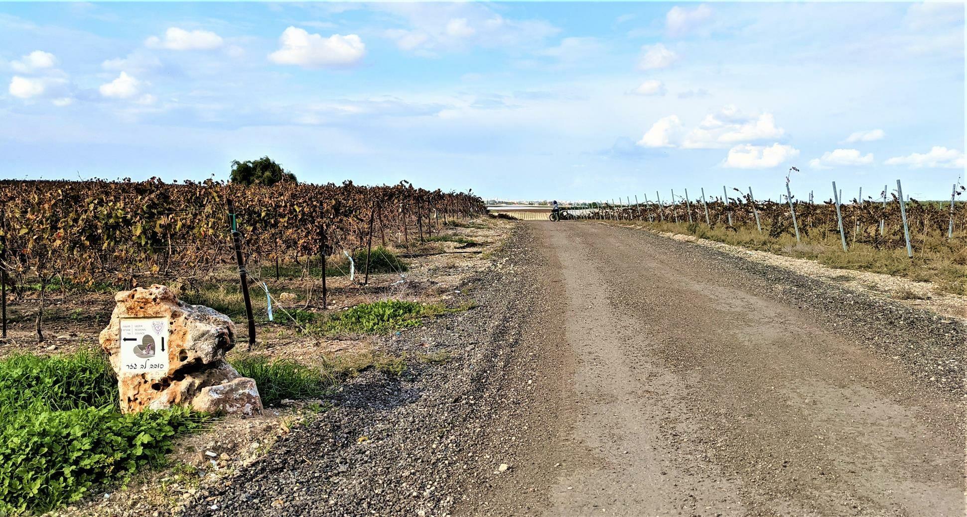 """סובב גזר, כרמים ונופים, מסלולי אופניים, לצד יער חולדה, צילום: ד""""ר ענת אביטל"""