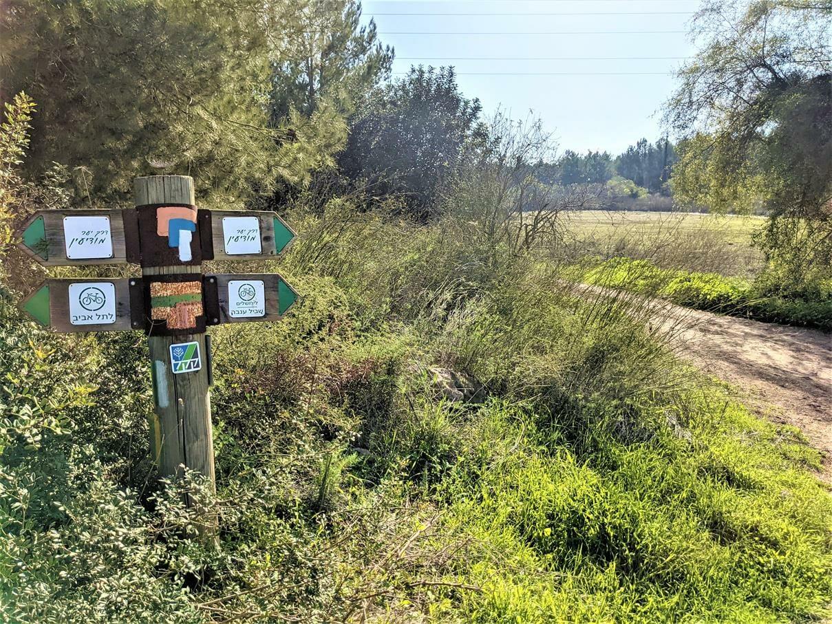 """סינגל ענבה ושביל ישראל, יער בן שמן, צילום: ד""""ר ענת אביטל"""