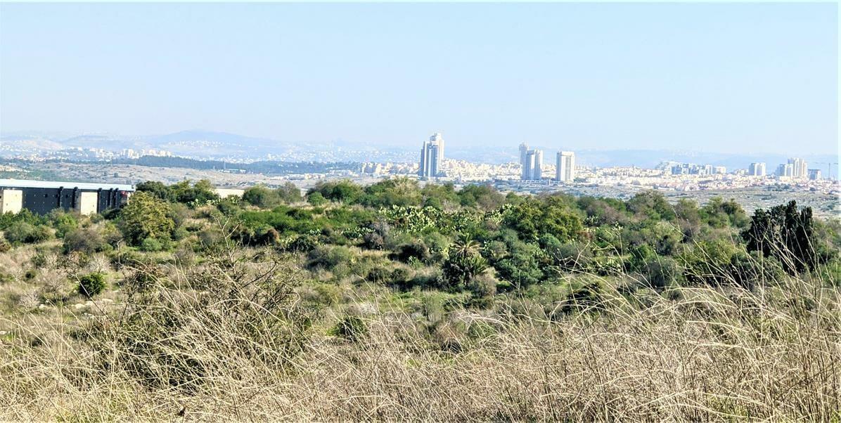 """מצפה חן - חורבת רגב -יערות מודיעין, צילום: ד""""ר ענת אביטל"""