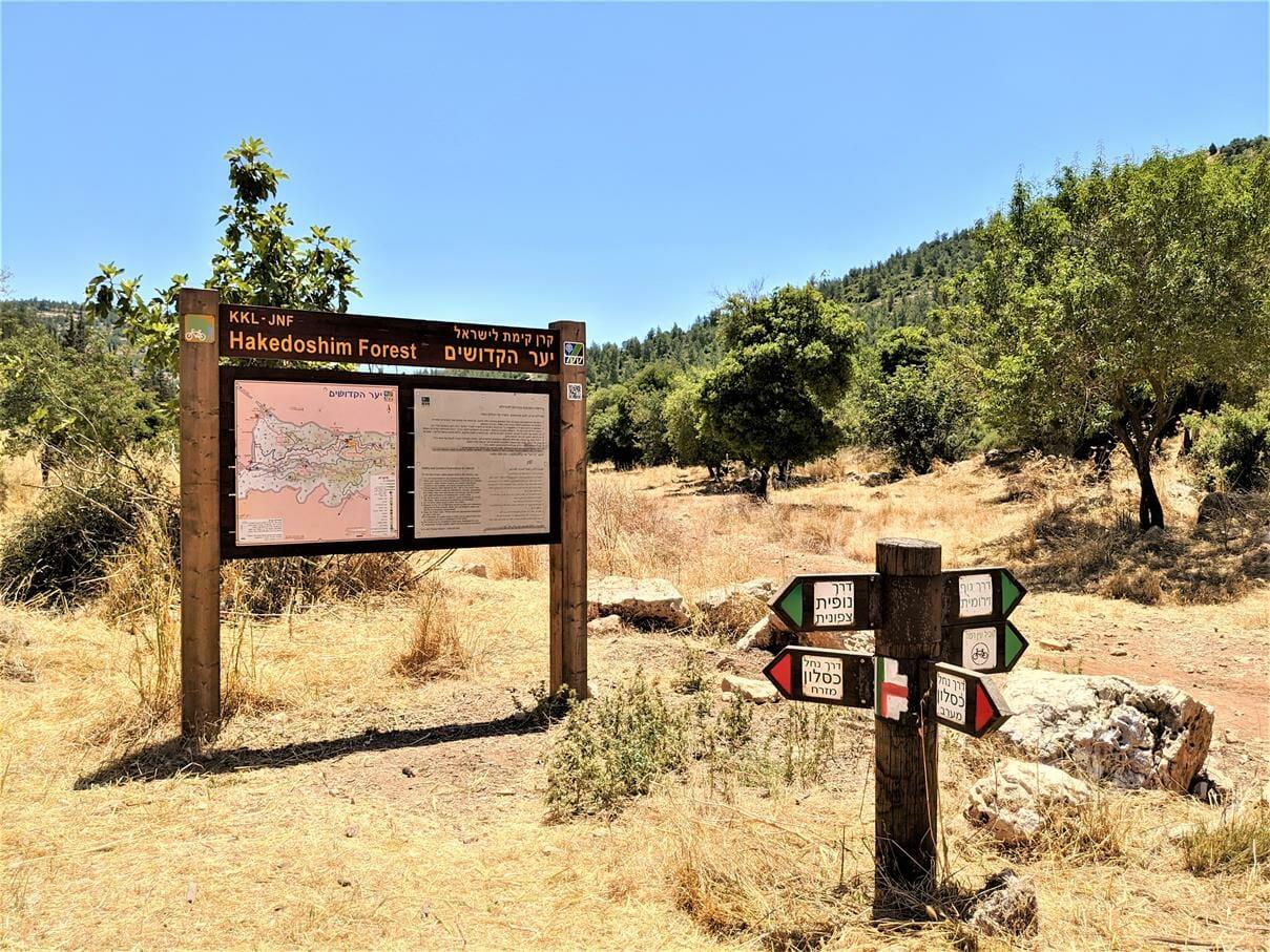"""נחל כסלון, מסעף שבילים, יער הקקדושים, צילום: ד""""ר ענת אביטל"""