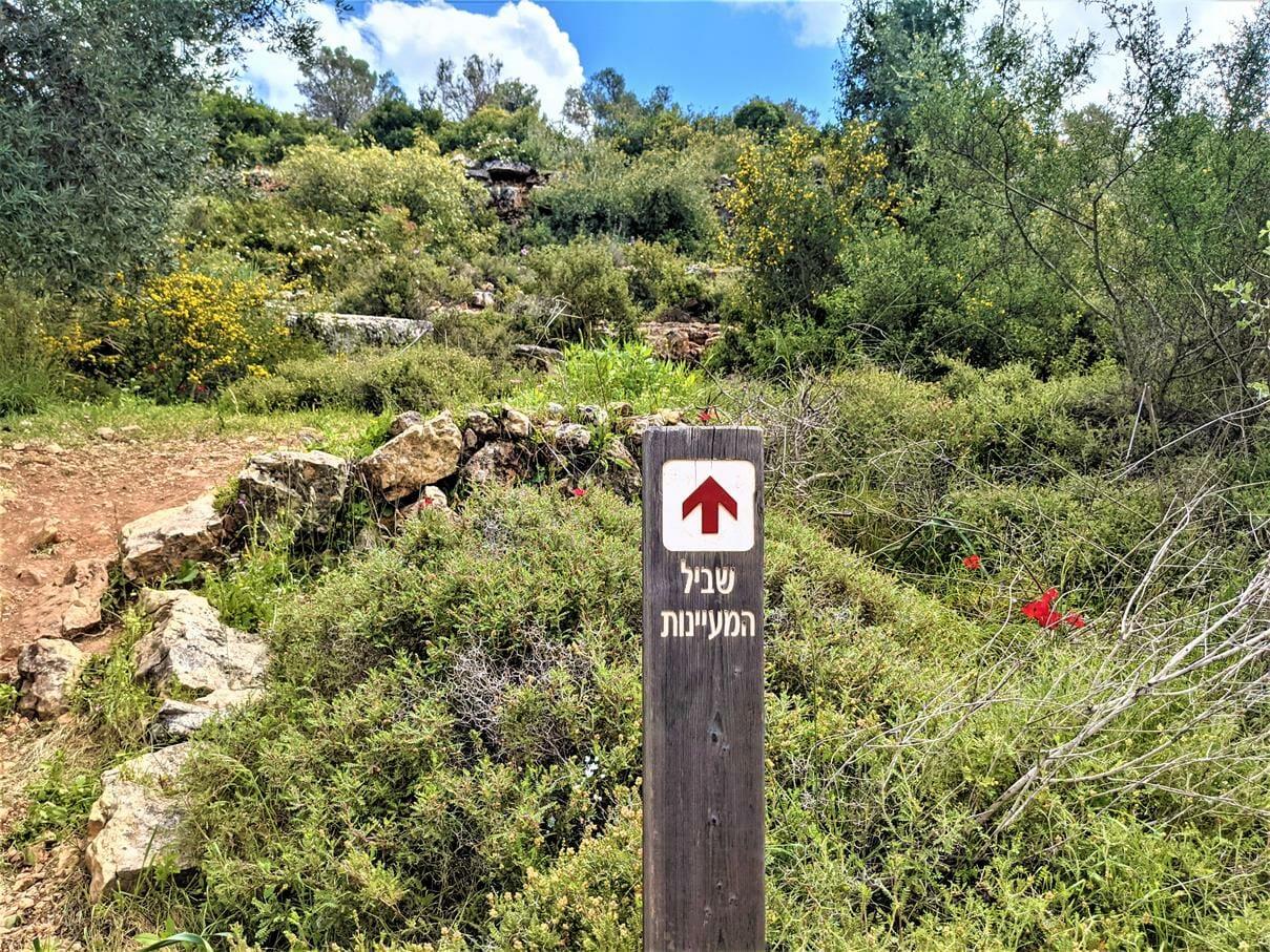 """שביל המעיינות בפארק גיבורות התנ""""ך, צילום: ד""""ר ענת אביטל"""