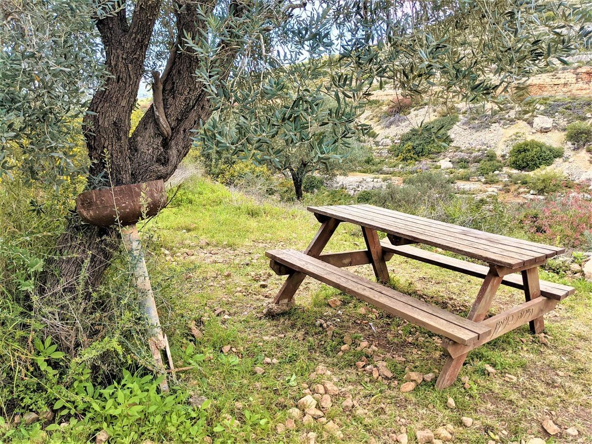 """מעיינות וברכות רחצה טובות, מעיינות פארק גיבורות התנ""""ך, צילום: ד""""ר ענת אביטל"""