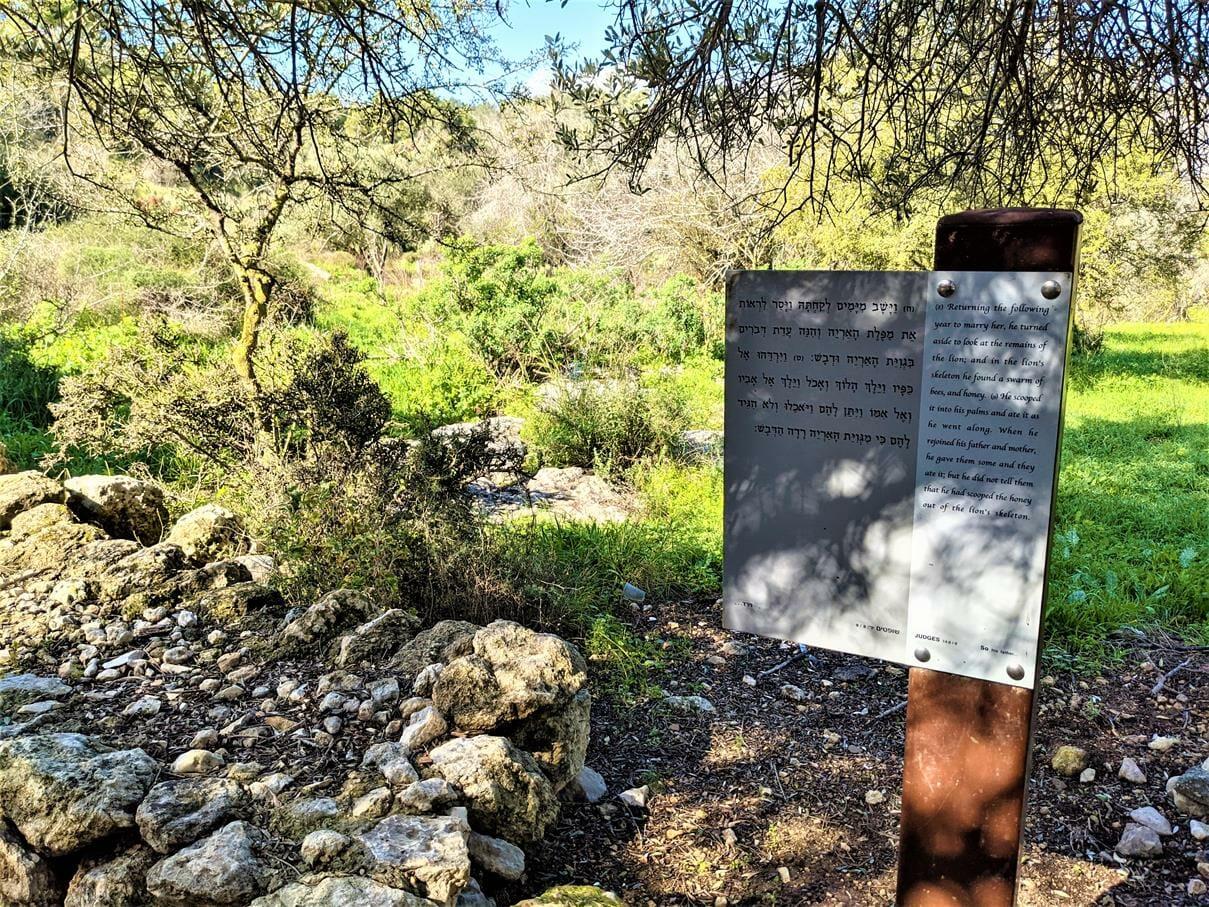 """פסוקי תנ""""ך בדרך אל קבר שימשון ומנוח בתל צרעה, פארק שוודיה ביער צרעה-יער הנשיא, צילום: ד""""ר ענת אביטל"""