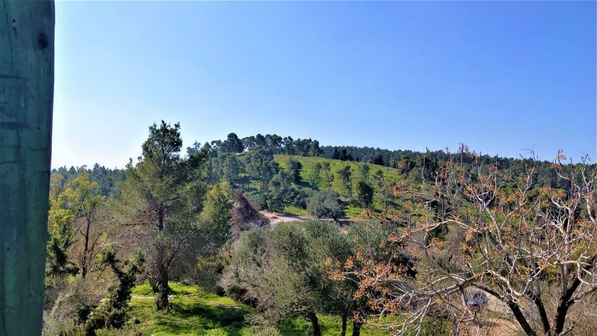 "תל צרעה, יער הנשיא, צילום: ד""ר ענת אביטל"