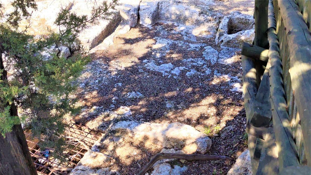 """גת חצובה בסלע גיר, מצפה צרעה, יער הנשיא, צילום: ד""""ר ענת אביטל"""