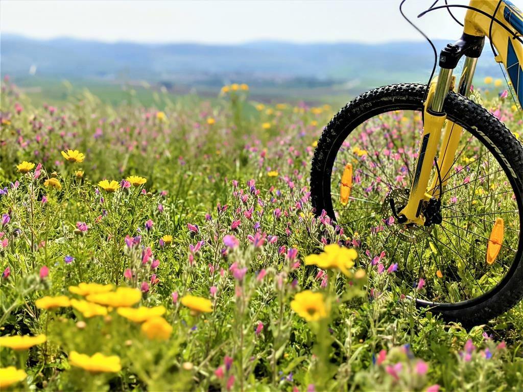 """מסלול אופניים ופריחת אביב בגבעות מודיעין-מזרח-מכבים, צילום: ד""""ר ענת אביטל"""