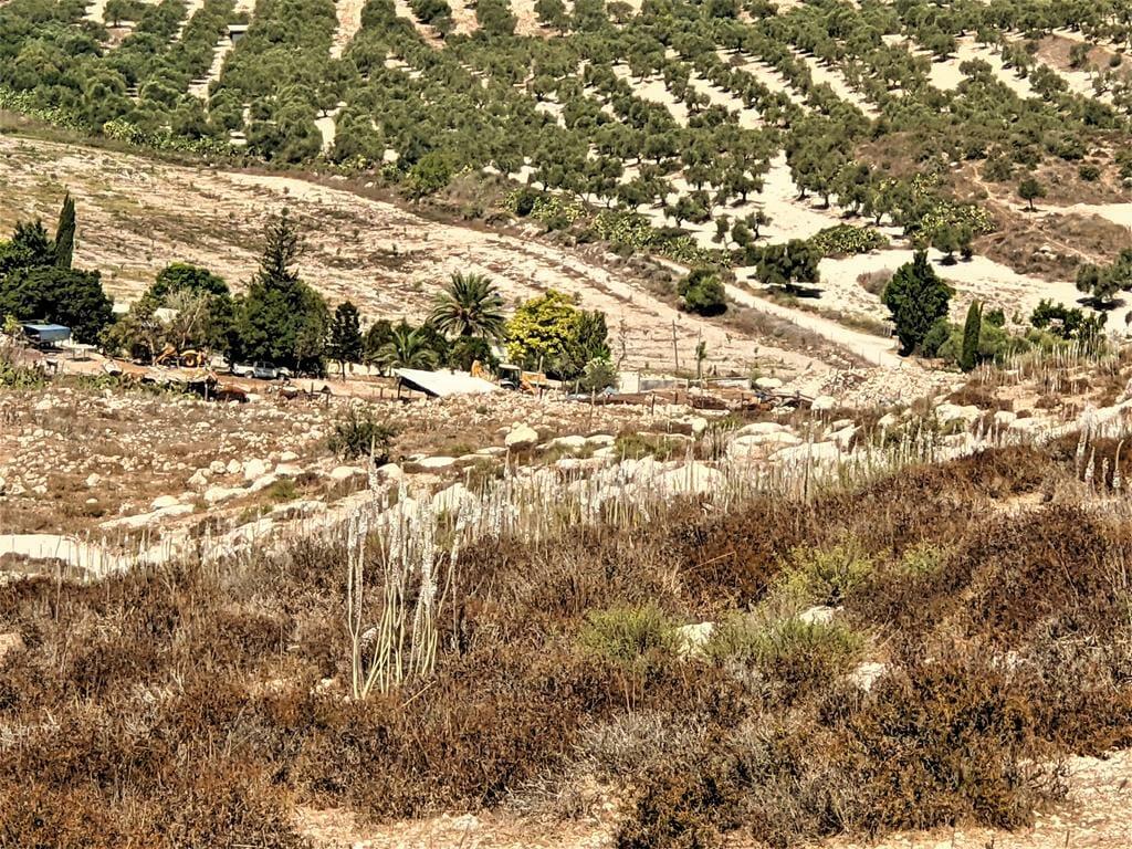 """פריחת חצבים בתצפית יער צרעה, צילום: ד""""ר ענת אביטל"""