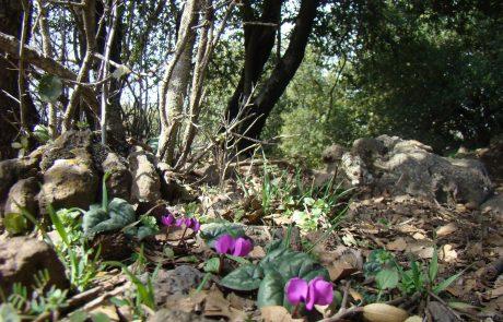 טיול ביער אודם: חורש קסום בצפון הגולן