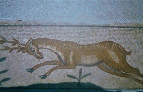 אייל הכרמל בפסיפסי ישראל: עדויות מקסימות מן הטבע הקדום