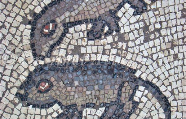 """פסיפס כנסיית אלומה: יונקים ועופות – ד""""ש מהפאונה הקדומה של ישראל"""