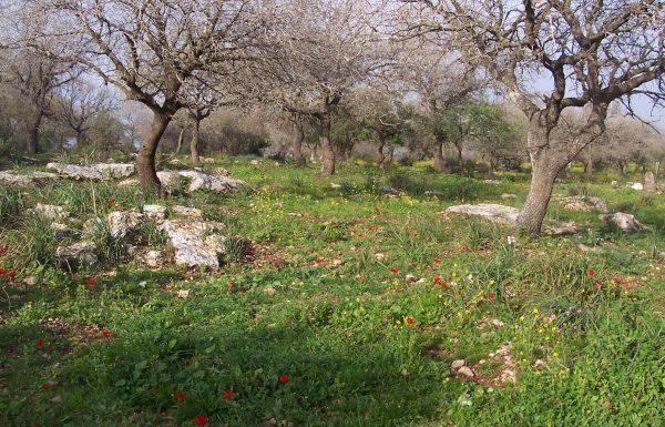 שמורת אלוני אבא: טיול בחורש ופריחת חורף ואביב