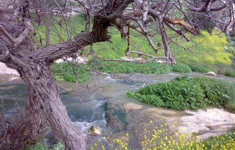 נחל ציפורי: טיול מים וטיילת מונגשת בצפון הקרוב