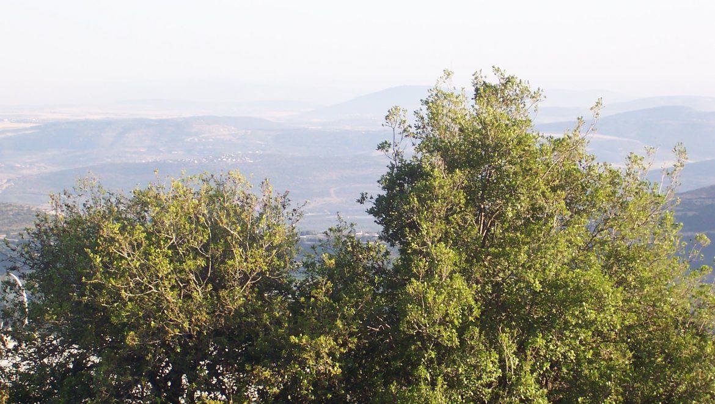 מערת פער: טיול בצפון למערה קארסטית קסומה בגליל העליון
