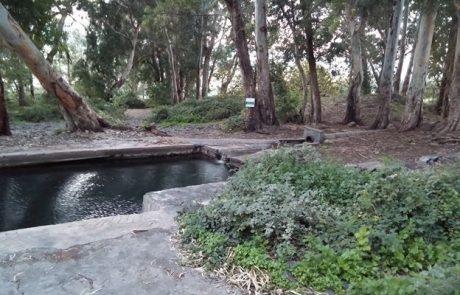 טיול ושחייה בצפון בעין עלמין: ברכת קצינים ברמת הגולן